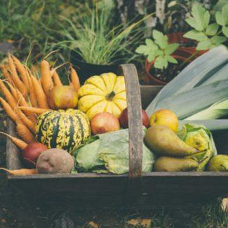 alimentation-chronique-nutrition4
