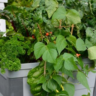 alimentation-jardinage5