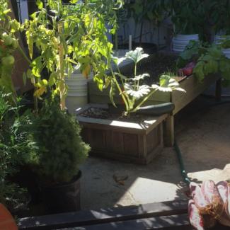 food-gardening-en-5